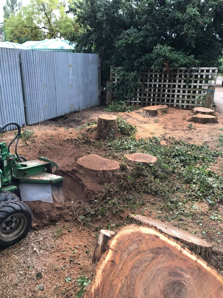 tree stump removed in Ballan